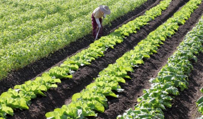 未経験から農業へ転職するには